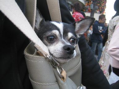 人ごみは危ないのでタロはバッグに・・・