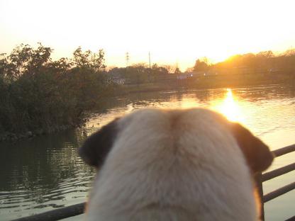 落日を見ながら、何想う?