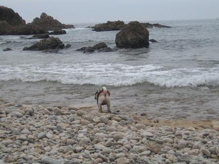 海を見つめるチッチ・・・