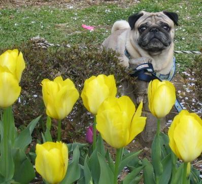 これは花見の時、代々木公園のちゅーりっぴ