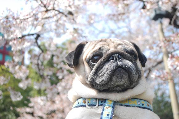 花見のときの写真だよ。
