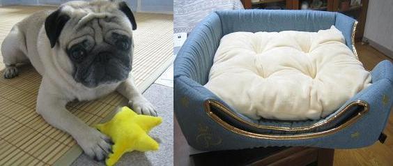 牙が折れた日に買ったベッド、チッチはベッドより付いてた星のおもちゃがお気に入り。