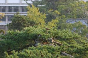 「出雲・松江旅行」2009.10.28.、「松江城」12、