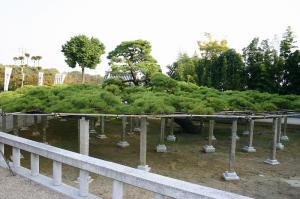 「倉敷帯江、不洗観音寺・帯江観音寺」、2009.10.29.、8