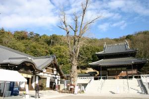 2010.1.「初詣」、「最上稲荷」、22