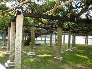 「倉敷帯江、不洗観音寺・帯江観音寺」、2009.10.29.、1