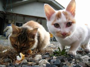 赤木さんちの「子猫」、2