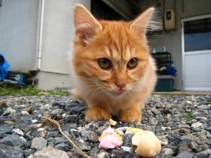 赤木さんちの「子猫」、4
