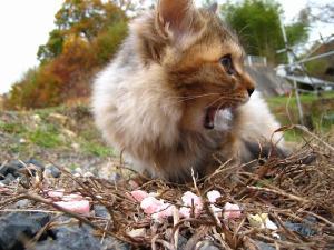 赤木さんちの「子猫」、5