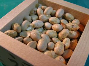 2010.2.3.節分、小林製菓・福山市柳津町の枡豆、2