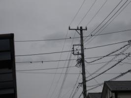 電線にたくさん