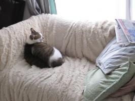 そのまま寝るネコ