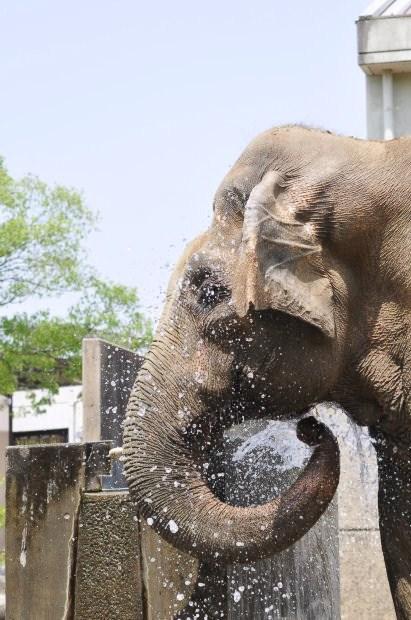 水浴び象さん