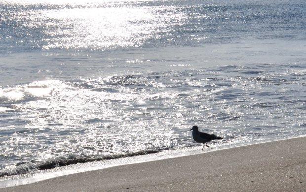 三浦海岸3
