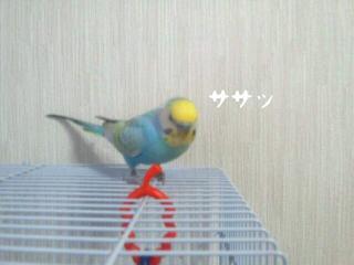 20110629_183843.jpg