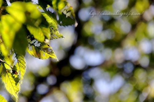 虫食いの葉っぱ