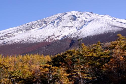 富士山五合目の黄葉