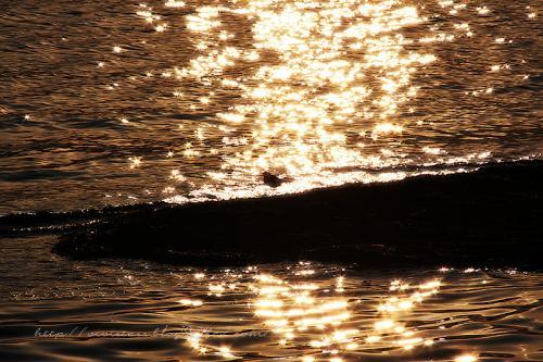 黄金色の湖と小鳥さん