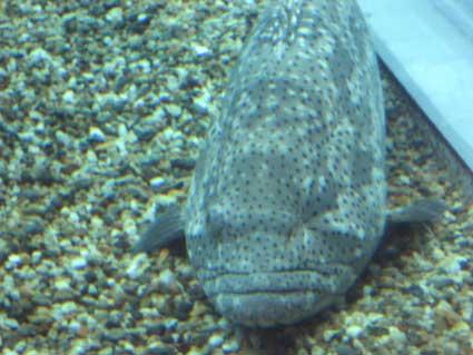 海遊館の魚