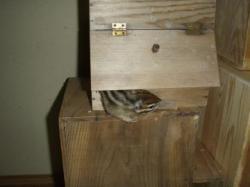 隠れんぼ巣箱
