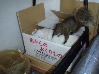 リスに踏まれた猫