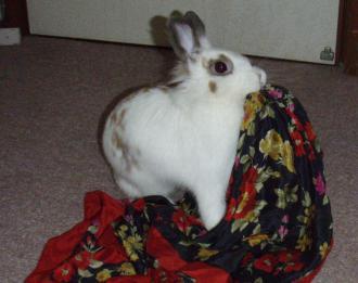 らびちゃんスカーフ