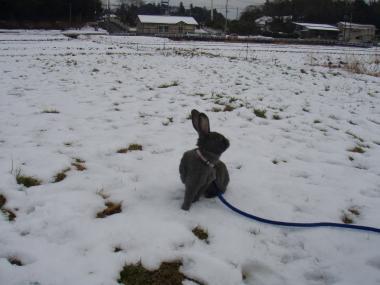 雪にたたずむメロ