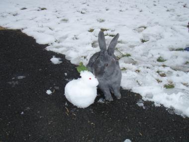 雪うさぎと並んで