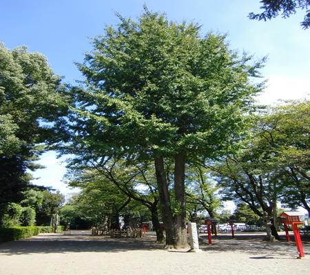 washimiya jinjya 20090907 09_R