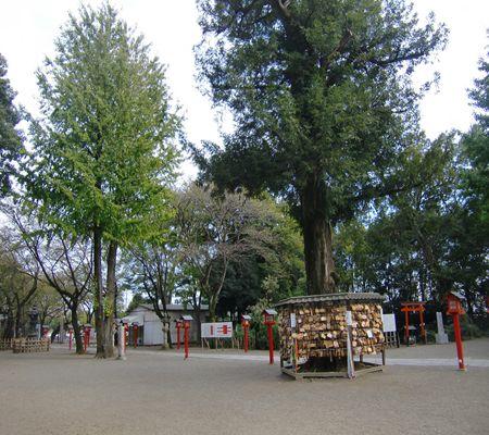washimiya jinjya 20091021 02_R