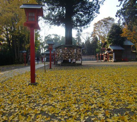 washimiya jinjya 20091126 04_R