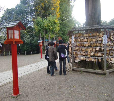 saitama washimiya jinjya 06 20101121_R