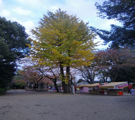 saitama washimiya jinjya 10 20101121_R