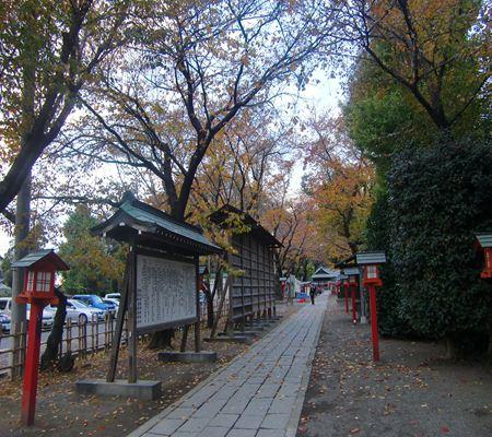 saitama washimiya jinjya 11 20101121_R