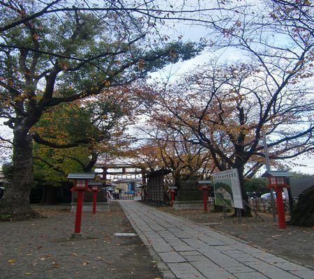 saitama washimiya jinjya 09 20101121_R