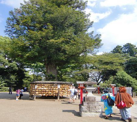 saitama washimiya jinjya 04 20100905_R