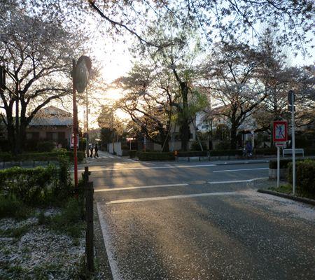 tky kunitachi city12 20110414 a chan butai_R