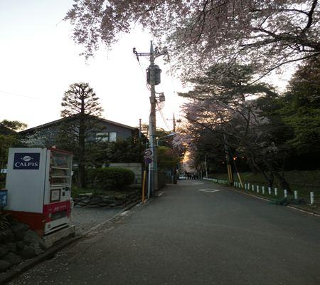 tky kunitachi city10 20110414 a chan butai_R