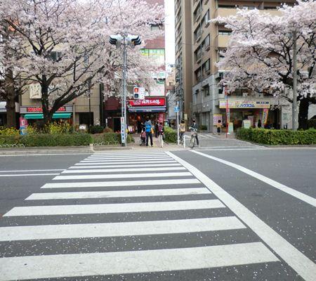 tky kunitachi city01 20110411 a chan butai_R