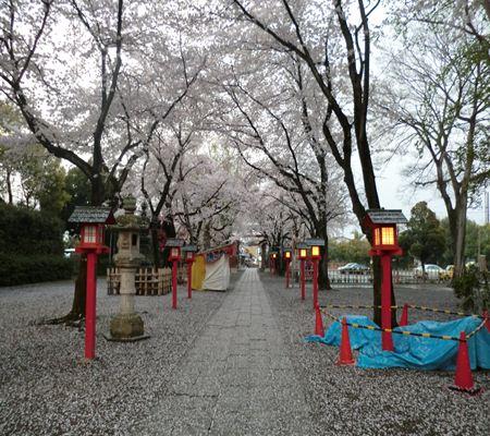 saitama washimiya jinjya 03 20110411_R