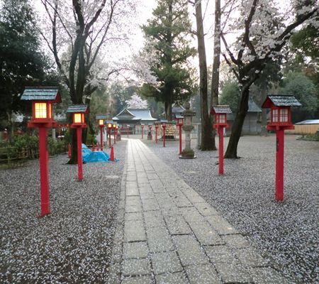 saitama washimiya jinjya 02 20110411_R