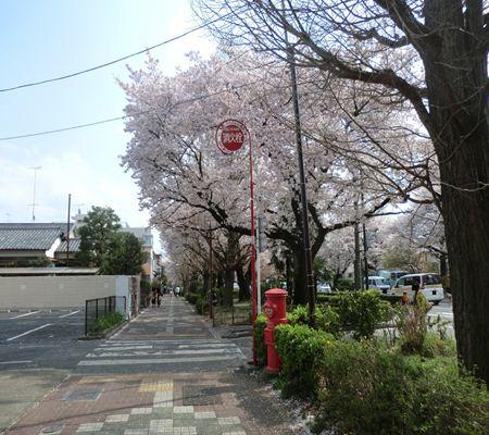 tky kunitachi shi  sakura a ch 02 20110411_R