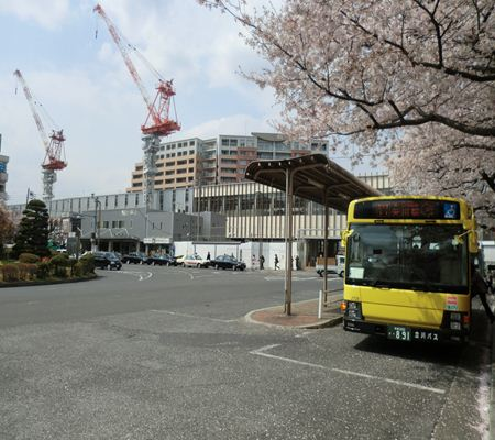 tky kunitachi shi  sakura a ch 01 20110411_R