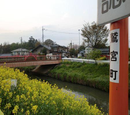 washinomiya river side 20110411 03 nanohana_R