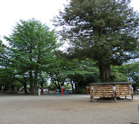 saitama washimiya jinjya 05 20110510_R