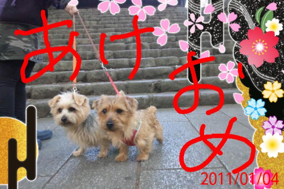20110104_213313.jpg