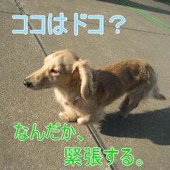 2_20100105185152.jpg