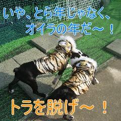 2_20100111192411.jpg