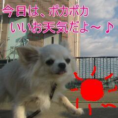 2_20100112183139.jpg