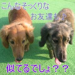 4_20091201180539.jpg